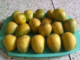 Mango Sell from Chapai
