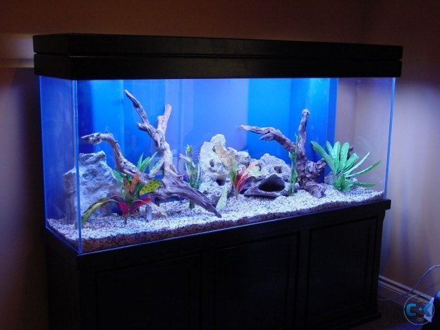 6 feet 2 5 feet 3 feet almost new aquarium call 0194122220 for Aquarium decoration ideas freshwater
