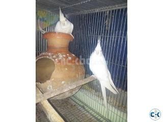 bird-cokatail-alvino
