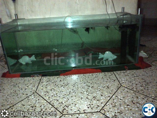 Big fish aquarium in tank low price u see clickbd for Fish tank price