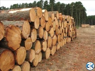HUGE AMOUNT OF SHAGUN AND OTHER TIMBER FOR SALE