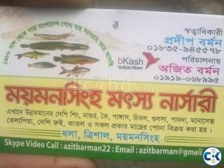 Fish farming in bangladesh
