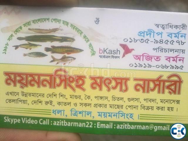 Fish farming in bangladesh | ClickBD large image 0