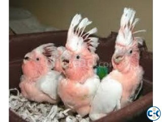 we are specialized in the breeding of birds parrots and we s