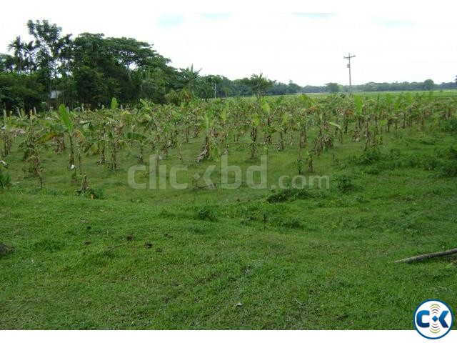 dairy farm with 800 decimal land at fulpur for sale | ClickBD large image 2