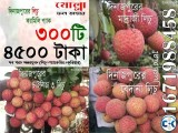 Bedena China 3 Madraj Lichu Combo Offer from Dinajpur