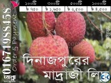All types of best Lichu of Dinajpur