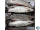 Persia Fish FreshFishBD