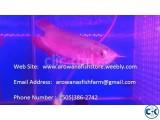 Chili Red Arowana And Other Arowana Fishes For Sale