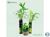 Online Indoor plants tree ABC 12