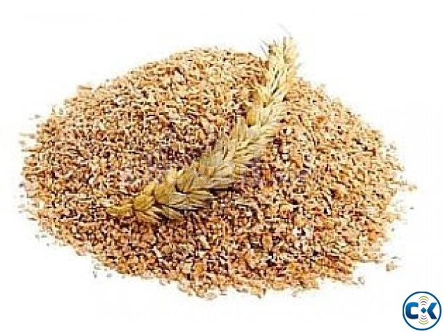 Details about Organic Wheat Grass Wheat Berries Grains for | ClickBD large image 1