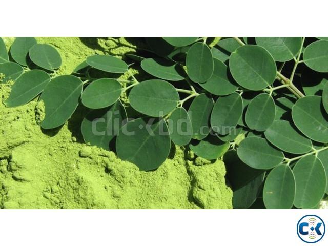 100 Pure Organic Moringa Oleifera Leaf Powder Brand New