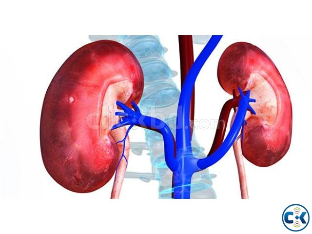 I want to sell my one kidney Urgently Price negotiable | ClickBD