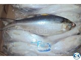 Export Quality Hilsha Fish
