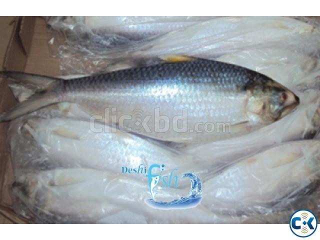 Export Quality Hilsha Fish   ClickBD large image 0