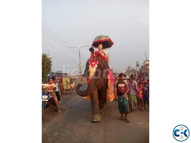 Elephant rent service | ClickBD large image 1