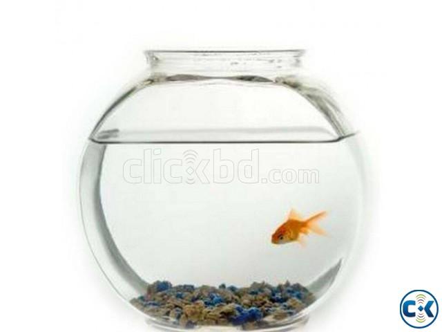 Gold Fish Jar   ClickBD large image 0