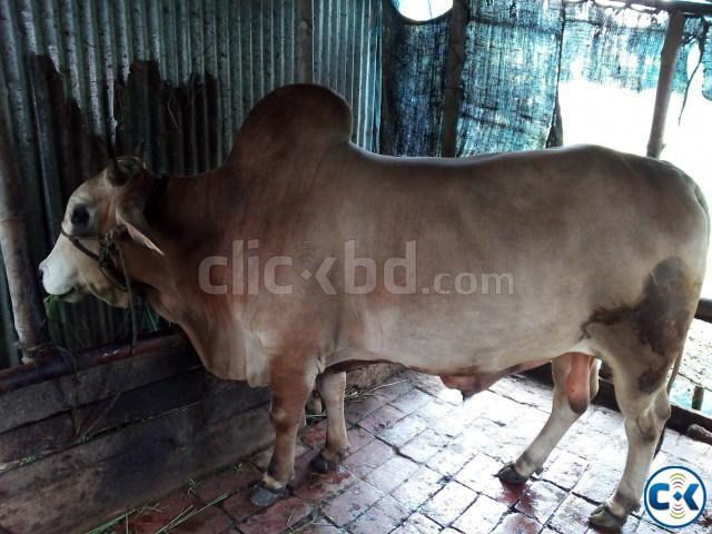Deshi Shar 01857018033 | ClickBD large image 0