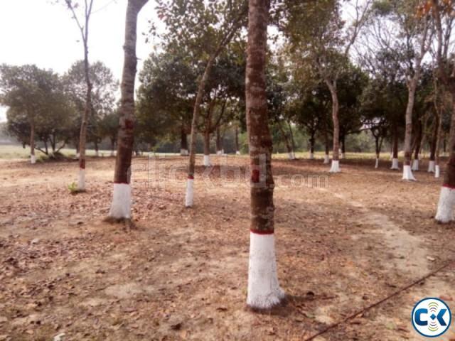 5 Katha Southfacing plot in Purbachal | ClickBD large image 0