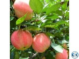 Apple Fruit Plant
