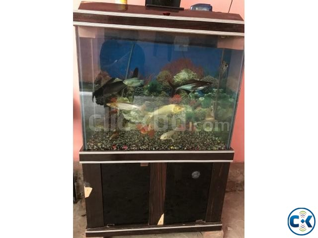 Aquarium including oxygen fish and decoration | ClickBD large image 0