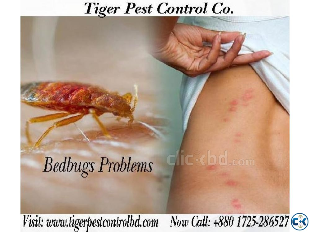 Tiger Pest Control Co | ClickBD large image 0
