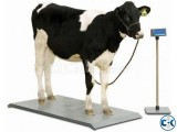 Digital Cow Weight Scale