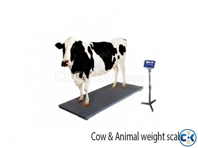 cow weight scale animal weight scale | ClickBD large image 0