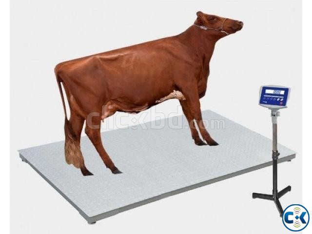 TF TFS-1020-2t Animal Weighing Scale in Bangladesh | ClickBD large image 0