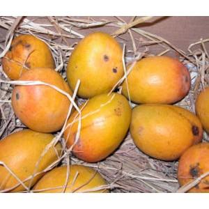 Original Mango from Rajshahi Chapainawabganj | ClickBD large image 1