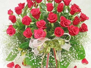 Red Roses Symbols of Love