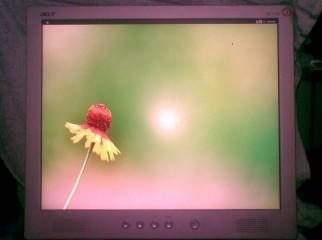 ACER AL1714 17 HD LCD Monitor Square