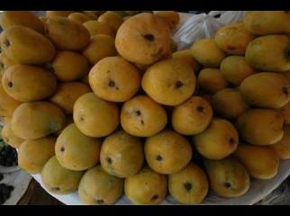mango LANGRA GOPALVOG HIMSAGOR