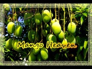 Mango from Rajshahi