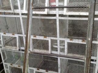 pigeon birdcage