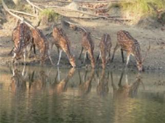 Eid Special Package for Sundarban-2N-3D.