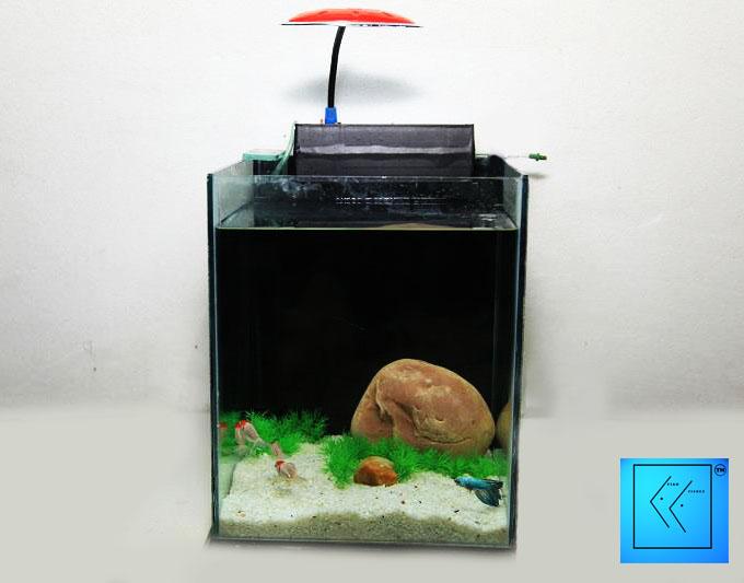 fish n fishee the online pet shop aquarium clickbd