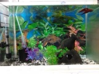 Aquarium Automatic heater Spongefilter Airpump ETC.MUST SEE